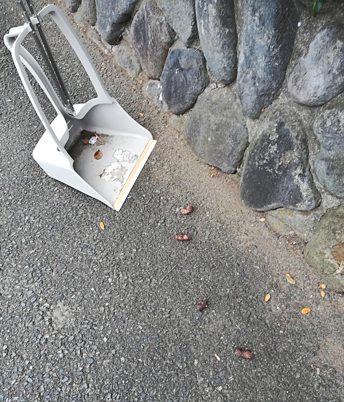 11/18 第24回 藤沢市一日清掃デー開催